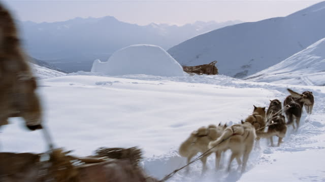 ms, husky sleigh dogs running through snow with sleigh, driving up to igloo, rear view, blackstone bay, alaska, usa  - inuit bildbanksvideor och videomaterial från bakom kulisserna