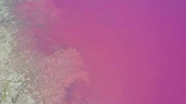 hutt lagoon pink lake at port gregory in western australia - chemical stock videos & royalty-free footage