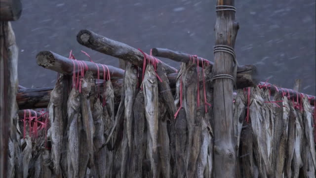 hwangtae dried fish (pollack are frequently prepared for korean ancestral rites table) - pollock fish stock videos & royalty-free footage