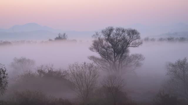 stockvideo's en b-roll-footage met hwapocheon stream in fog / gimhae-si, gyeongsangnam-do, south korea - plate met stilstaande achtergrond