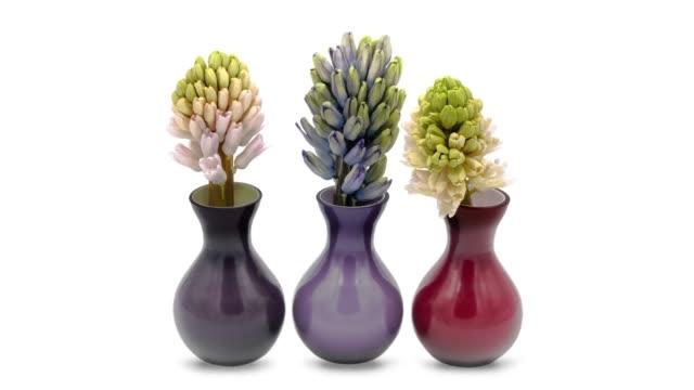 ヒヤシンスの花瓶に - ヒヤシンス点の映像素材/bロール