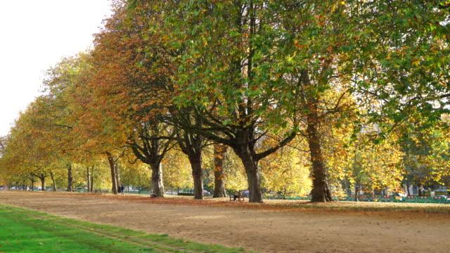 hyde park in autumn, london - ロンドン ハイドパーク点の映像素材/bロール