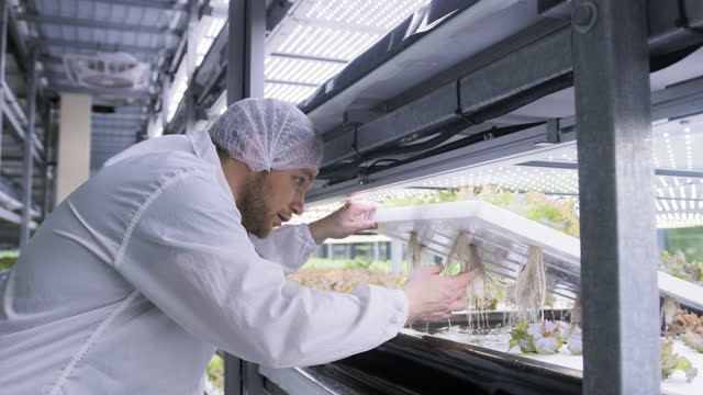 hydrokulturspezialist untersucht wurzelstruktur von salat - biotechnologie stock-videos und b-roll-filmmaterial
