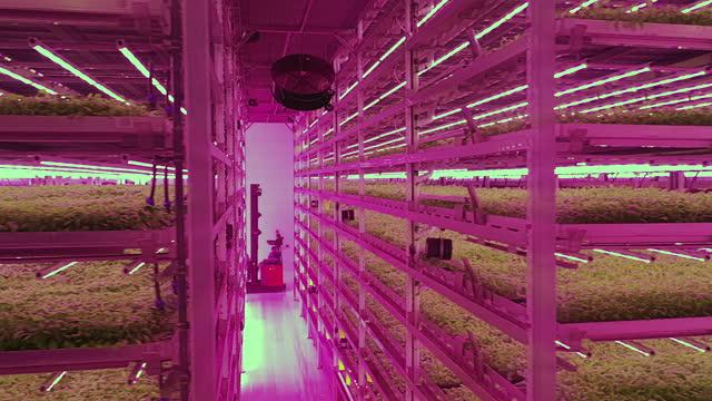 垂直農場における水耕栽培技術システムとフォークリフト - 水栽培点の映像素材/bロール
