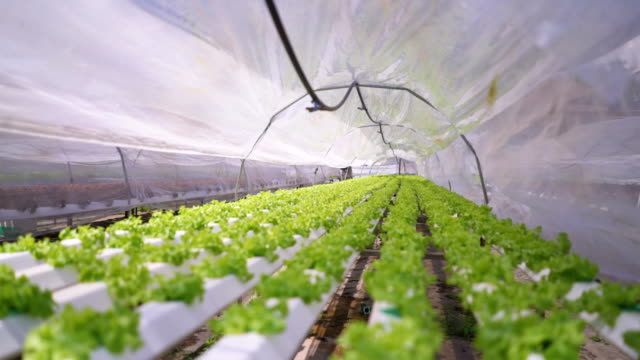 hydroponic vegetable - climate stock videos and b-roll footage