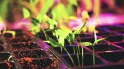 Hydroponics Farm Growth Crop Time Lapse 4K