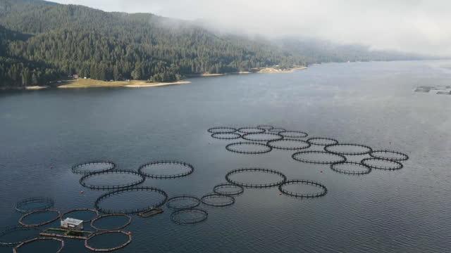 stockvideo's en b-roll-footage met hyper vervallen. vissen in mist. luchtfoto over een grote viskwekerij met veel visbehuizingen. - visindustrie