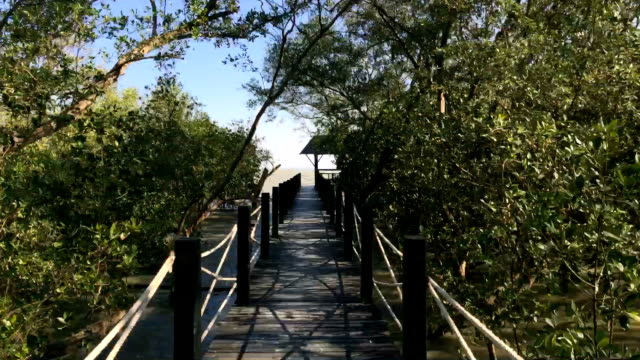hyper lapse mangrove - ecoturismo video stock e b–roll