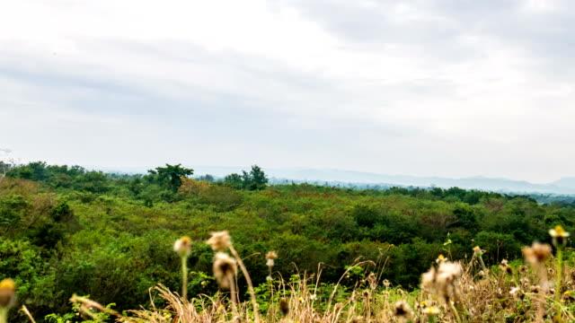 hyper förfaller skott av gröna skogen på foten av berg och rörliga himmel bakgrund - vinjettering bildbanksvideor och videomaterial från bakom kulisserna