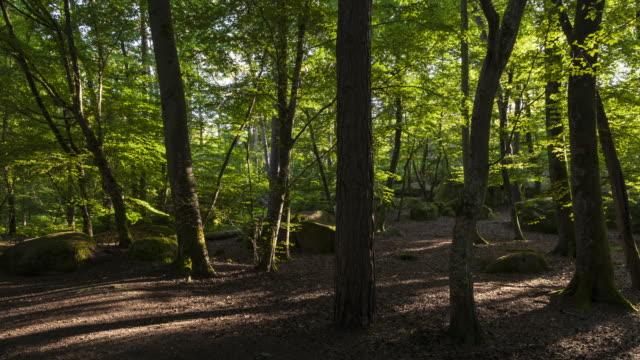 vidéos et rushes de hyper lapse / tl wander in the forest in sunrise - forêt
