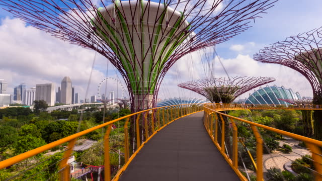 hyperlapse along skywalk, gardens by the bay, supertree grove - grove stock videos & royalty-free footage