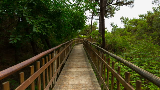 Hyperlapse along wooden walkway through nature reserve