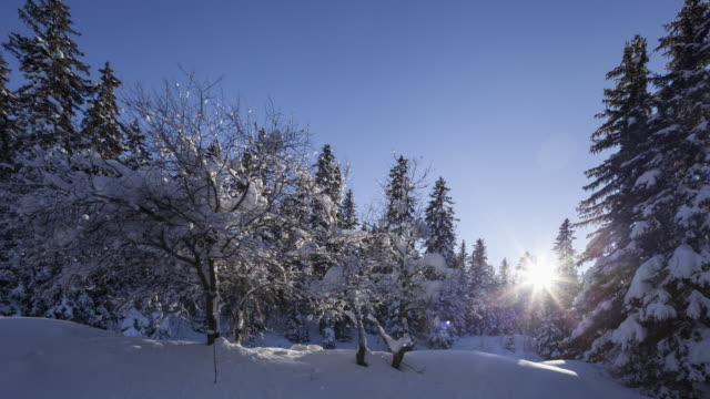 hyperlapse at sunrise along evergreen trees covered by snow. - winter stock videos & royalty-free footage