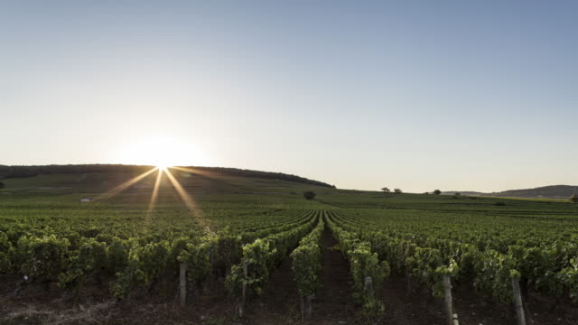 hyperlapse / time lapse night to day on road along burgundy vines - sunrise dawn stock videos & royalty-free footage