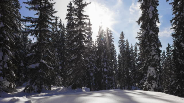 hyperlapse time lapse tracking shot in a forest of snowy fir trees  - meribel stock videos & royalty-free footage