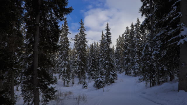 hyperlapse time lapse tracking shot on cross-country trail between snowy fir trees - meribel stock videos & royalty-free footage