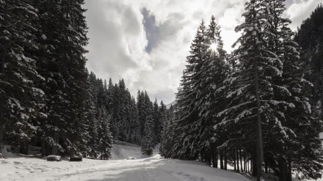 Hyperlapse Time lapse tracking shot on snowy path between fir trees