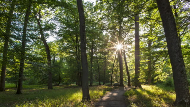 vídeos de stock e filmes b-roll de hyperlapse / time lapse walk on a footpath in forest with shining sun - trilho