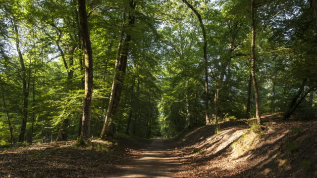 hyperlapse / tl on a forest road - footpath stock-videos und b-roll-filmmaterial