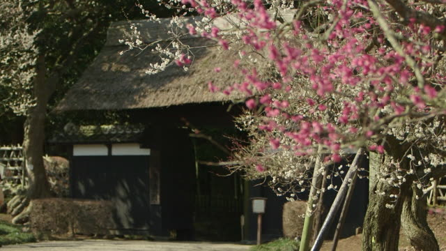 Ibaraki Kairakuen Garden Shifting focus from the white and pink plum flowers on tree branches in the foreground to the thatched Kobuntei pavilion...