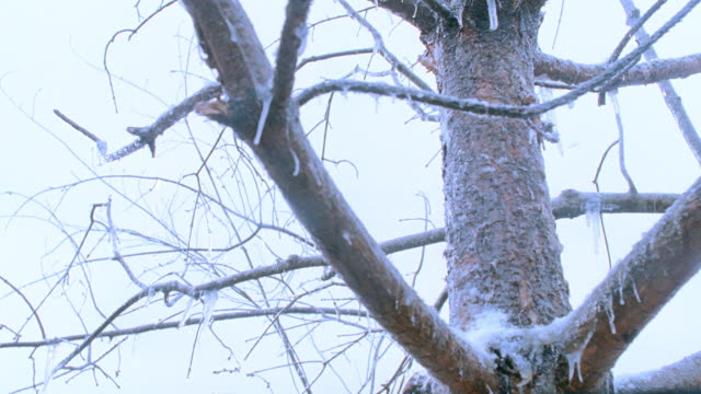 ice clings to a tree's bare branches during a winter storm. - 2008 stock videos & royalty-free footage