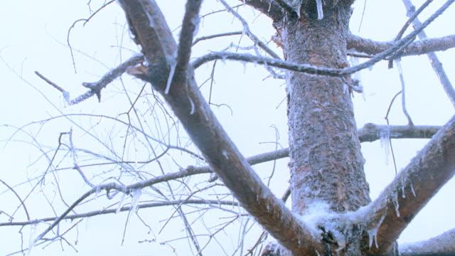 vídeos de stock, filmes e b-roll de ice clings to a tree's bare branches during a winter storm. - chuva congelada