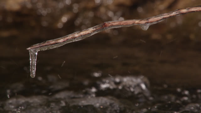 ice covered twig over flowing stream in winter, cumbria, england - twig stock videos & royalty-free footage