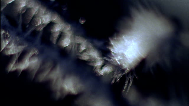 ice crystals cling to branches - ast pflanzenbestandteil stock-videos und b-roll-filmmaterial