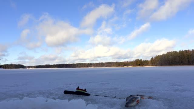 vídeos de stock e filmes b-roll de ice fishing winter time lapse - peixe congelado