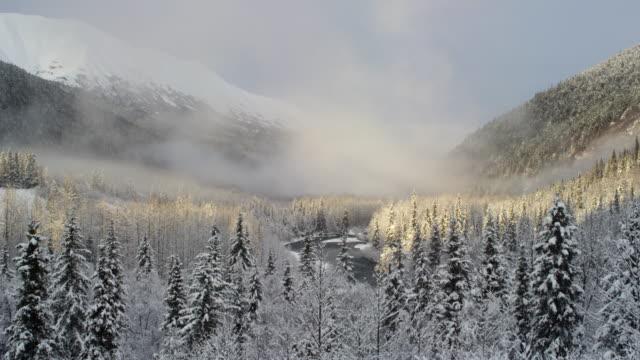 Ice fog and hemlock trees in Alaska valley