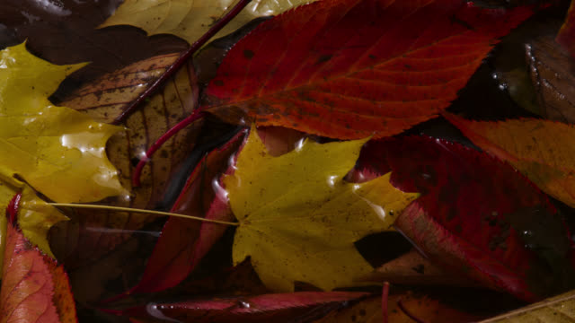 tl ice forms on ground and fallen autumn leaves, uk - yellow stock videos & royalty-free footage