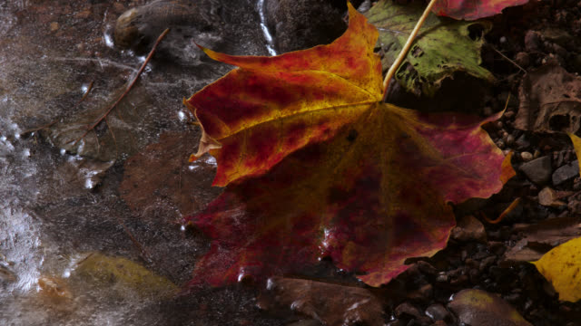 tl ice forms on ground and fallen autumn leaves, uk - frozen stock videos & royalty-free footage