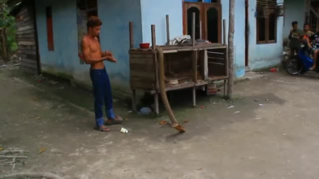 stockvideo's en b-roll-footage met ice habibi a snake charmer plays with wild king cobras at his house on april 1 2017 in mentulik village kampar riau province indonesia this is the... - charmant