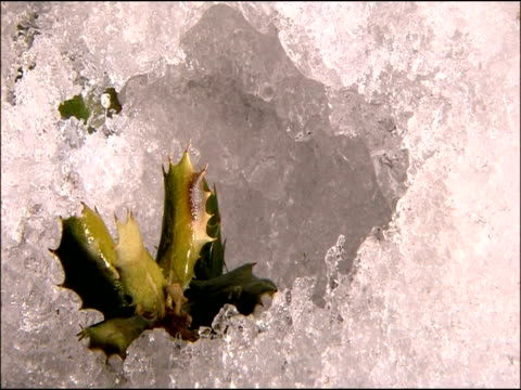 ice melting around holm oak (quercus ilex) leaves, parque natural sierra nevada, andalucia, spain - 落葉樹点の映像素材/bロール