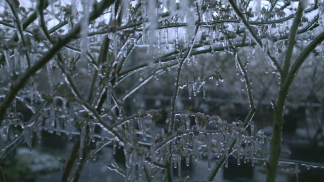 ice on blueberry bushes, scotland - frost stock videos & royalty-free footage