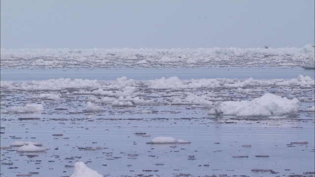ice on the surface of the sea in the north pole - pole stock videos & royalty-free footage
