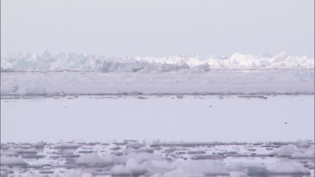 vidéos et rushes de ice on the surface of the sea in the north pole - iceberg bloc de glace