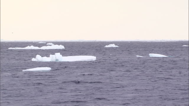 ice on the surface of the sea in the north pole - crushed ice stock videos & royalty-free footage