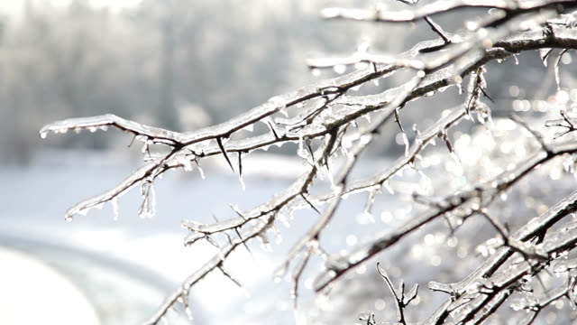 ice storm aftermath - frozen stock videos & royalty-free footage