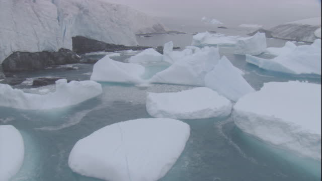 icebergs float in a sea near coastal cliffs in antarctica. - antarctica iceberg stock videos & royalty-free footage
