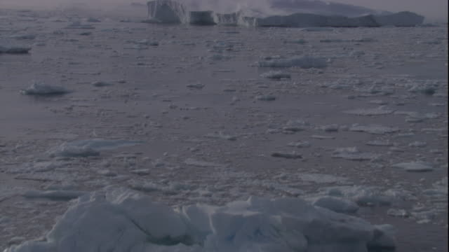 """vidéos et rushes de icebergs float in sea near the edge of a crumbling ice shelf in antarctica. available in hd - """"bbc natural history"""""""