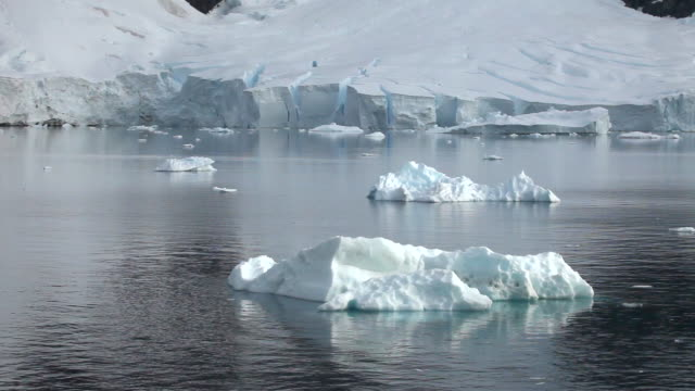 icebergs in front of ice shelf/glacier edge med/wide, antarctica - antarctica iceberg stock videos & royalty-free footage