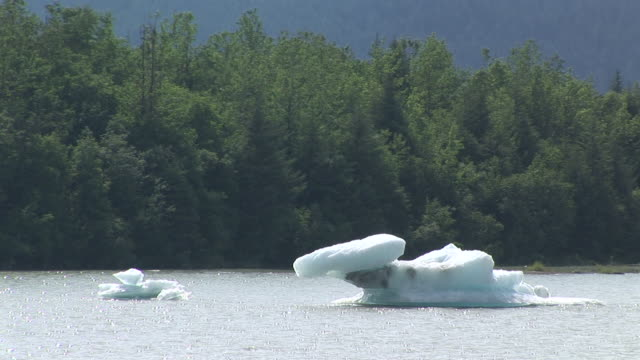 ms, icebergs on mendenhall lake, forest in background, tongass national forest, alaska, usa - 国有林点の映像素材/bロール