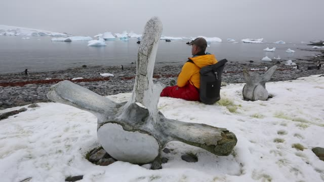 icebergs oof curverville island on the antarctic peninsular, which is one of the fastest warming places on the planet, with gentoo penguins and... - human vertebra stock videos & royalty-free footage
