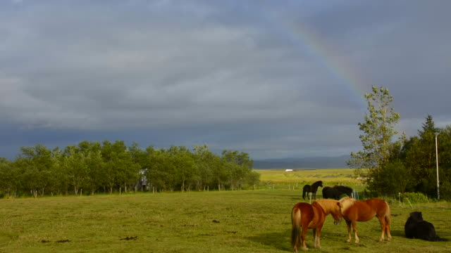 Iceland Borgarneskirkja horses with rainbow on farm in field in West Iceland