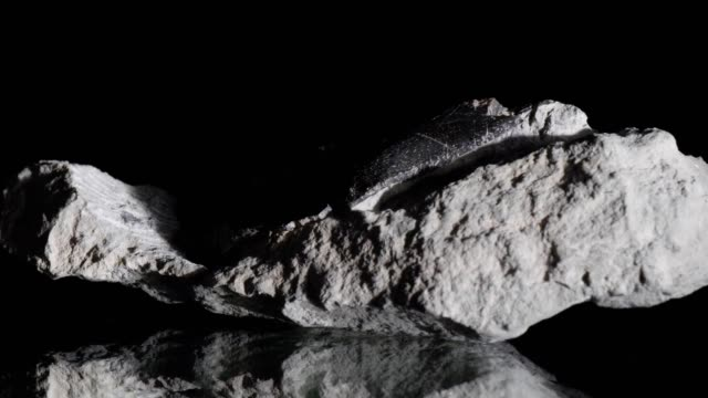 ichthyosaur bone turning on black - stone material stock videos & royalty-free footage
