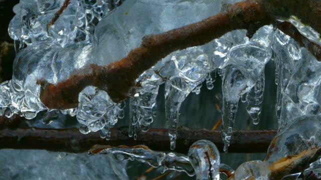 vídeos de stock, filmes e b-roll de icicles at branch - pingente de gelo