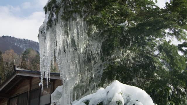 vídeos de stock, filmes e b-roll de icicles grow on tree in shirakawa, low angle - pingente de gelo
