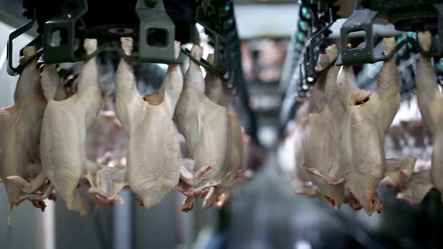 icken meat production line. food industry. - infectious disease stock videos & royalty-free footage
