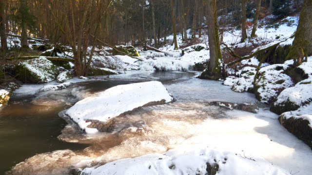icy forest stream - evergreen stock videos & royalty-free footage